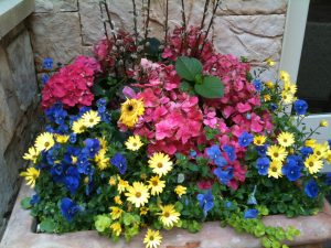 colorful garden container