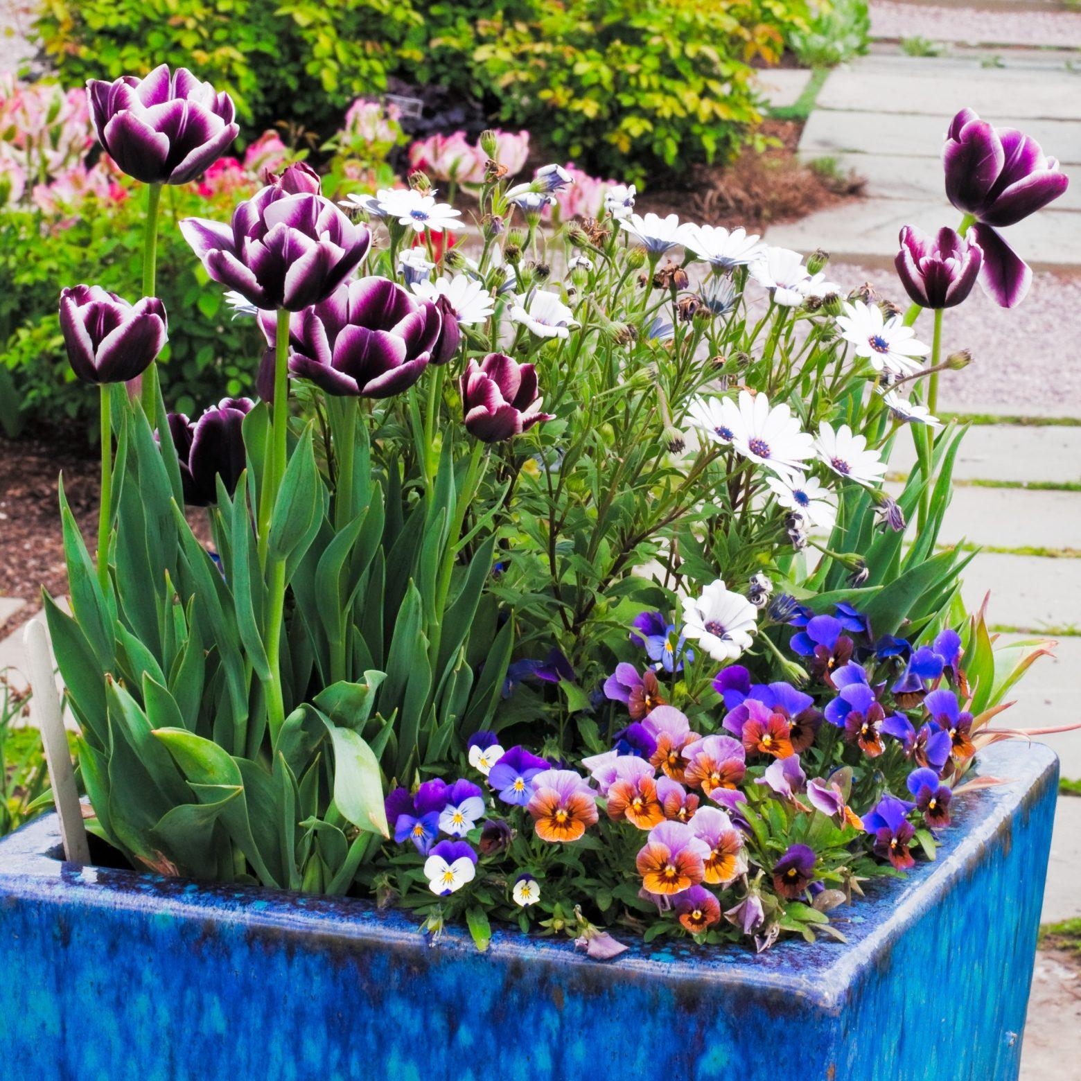 Backyard Container Gardening for Beginners